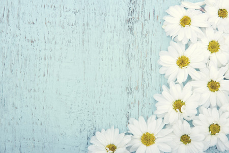 Light blue wooden vintage background with copy space and white daisies