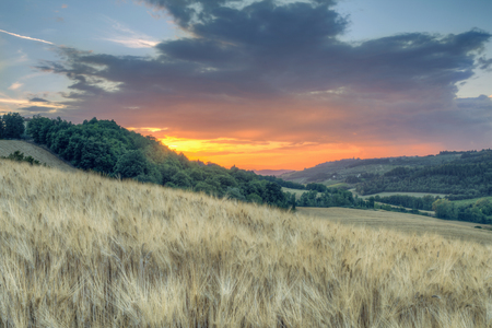 Sunset landscape of Tuscan green hills and fields of\ barley