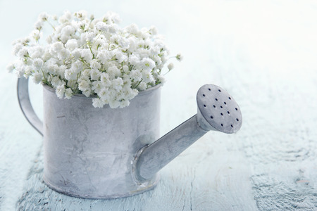 Old vintage metal watering can filled with white baby's breath gypsophila flowers on light blue shabby chic background