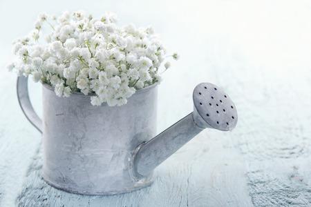 Old Vintage-Metall-Gießkanne mit Atem Gypsophilablumen weißen Babys auf hellblau shabby chic Hintergrund gefüllt Standard-Bild - 31260637