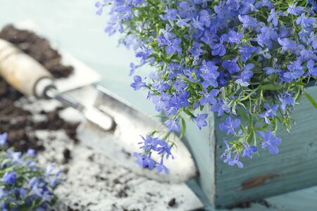 garden: Vintage garden tools and blue flowers - concept for gardening Stock Photo