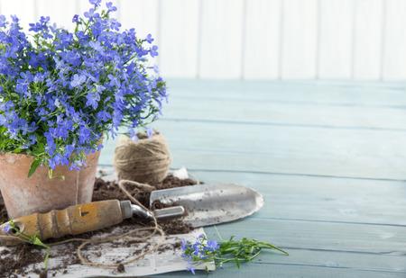 gardening    equipment: Vintage garden tools and blue flowers in terracotta flower pots - concept for gardening