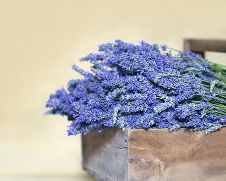 lavendin: Bouquet of lavender flowers in a vintage wooden basket on terracotta floor Stock Photo