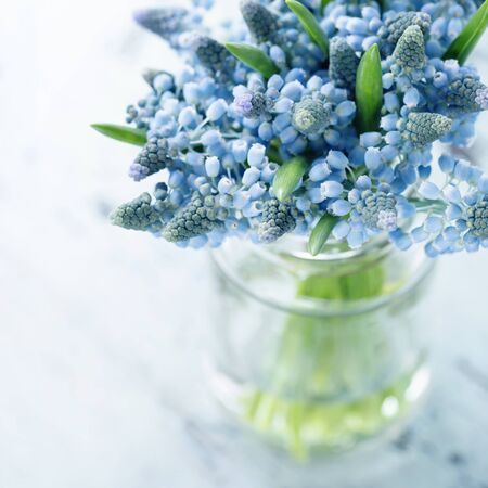 glass vase: Blue muscari flowers in a glass vase
