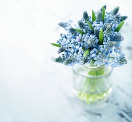 Blue muscari flowers in a glass vase