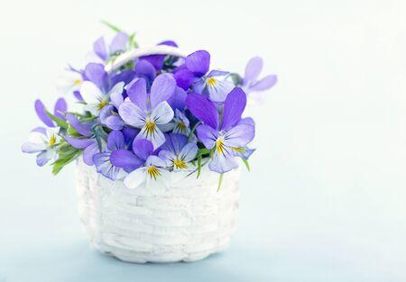 fondos violeta: Ramo de pensamientos violetas en una cesta blanca