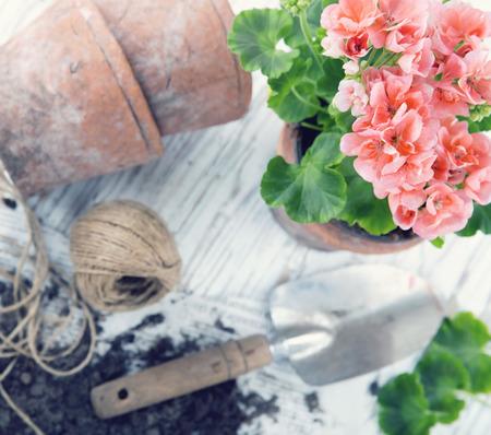 Vintage tuingereedschap en roze geranium bloemen - concept voor de tuin