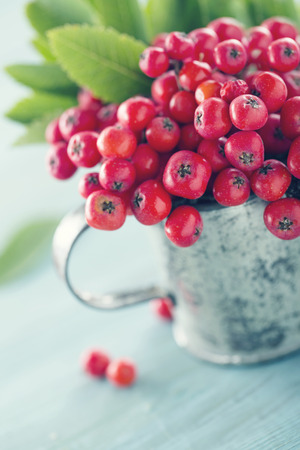 Ripe red rowan berries in a metal tin cup on old wooden background with vintage editing Banco de Imagens