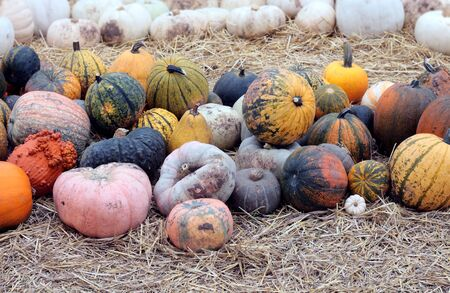 winter gourd squash on the ground