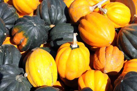 Pila de calabaza bellota en la temporada de otoño