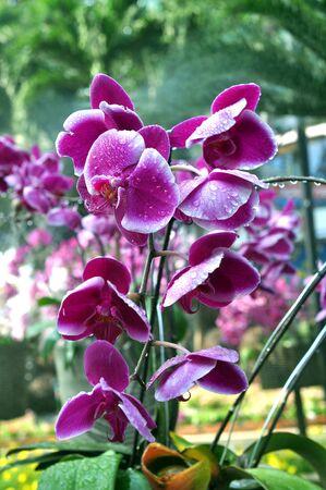 Violet orchid in garden on daytime