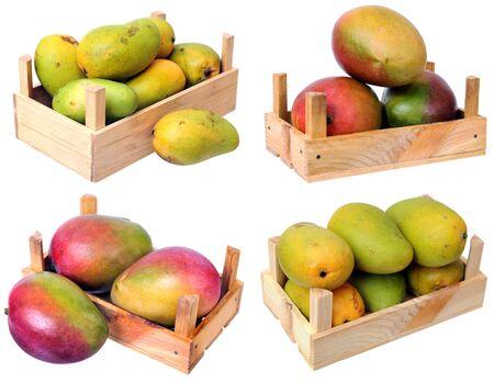 ataulfo mango in crate isolated on white Reklamní fotografie