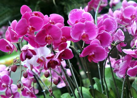 beautiful purple orchid in  garden Stock fotó