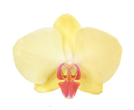 Single yellow orchid isolated on white background