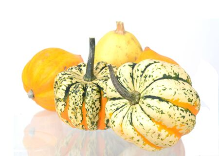 A group mini pumpkin  on white background