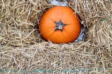 decorative mini pumpkin with hay at market place