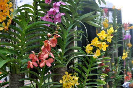 a group of orchid flower in garden