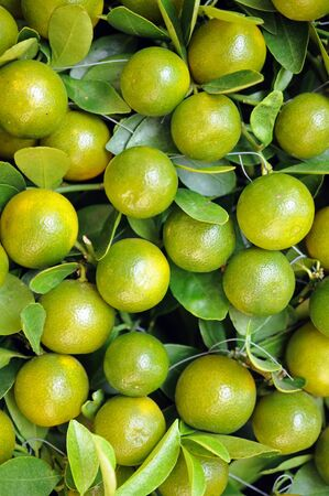 flat of cumquats grow on tree for background uses