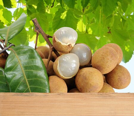 Longan fruit full case under tree in noon time Reklamní fotografie - 133939842