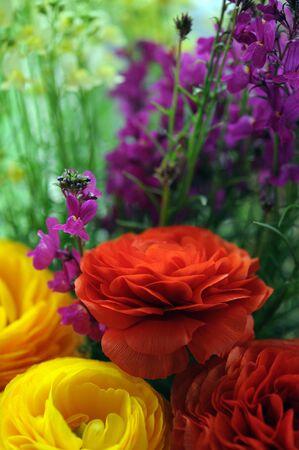 mix of flower in spring garden
