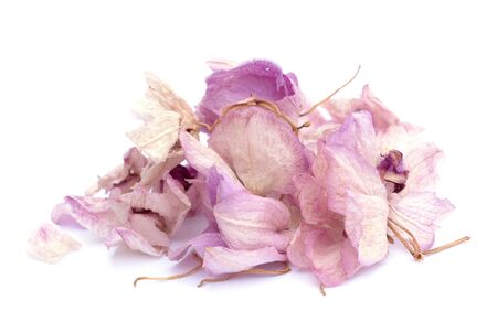 a lot of dried orchid on white background