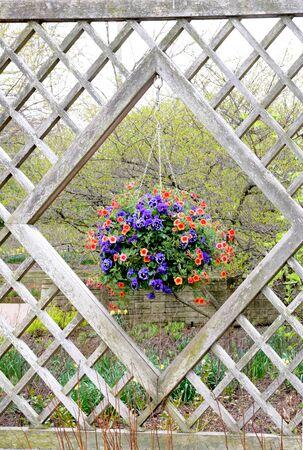 blooming flowers hanging on window in garden 版權商用圖片