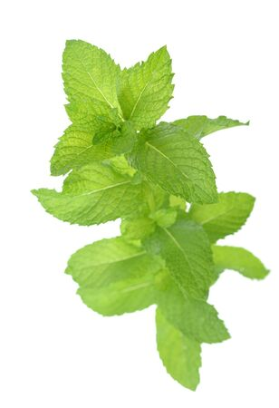 a fresh green mint branch isolated on white