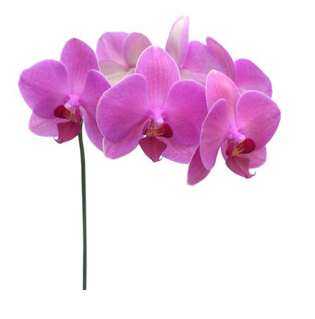 schöne lila Orchidee isoliert auf weißem Hintergrund