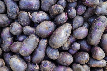 organic purple potato display at the market place
