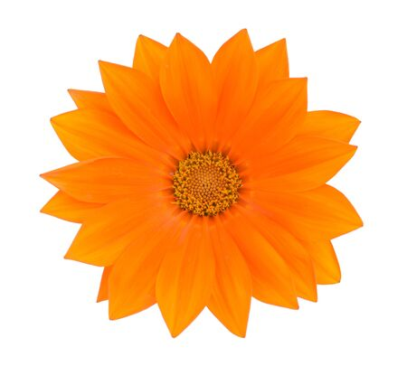 beautiful orange Gazania isolated on white background