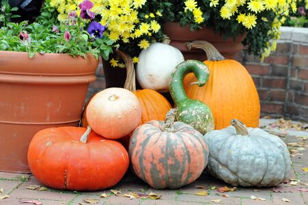 bumpy gourd and pumpkin on the ground