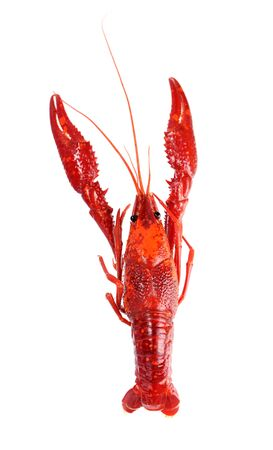 steamed crawfish isolated on white background Фото со стока