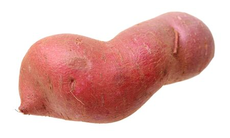 an odd size sweet potato isolated on white