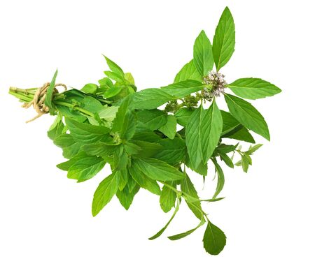 a bunch of spicy mint isolated on white