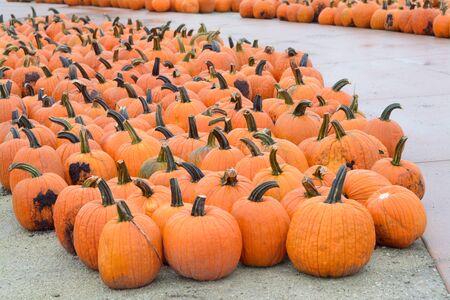 A lot of big pumpkins at market place