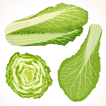 Chinese cabbage isolated on background. Whole, cut and cabbage leaf.