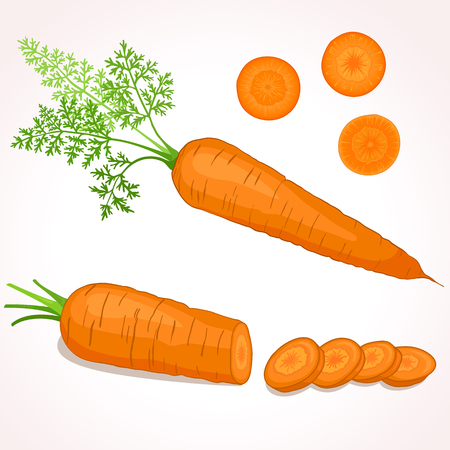 haulm: illustration of carrot with tops. Sliced carrots