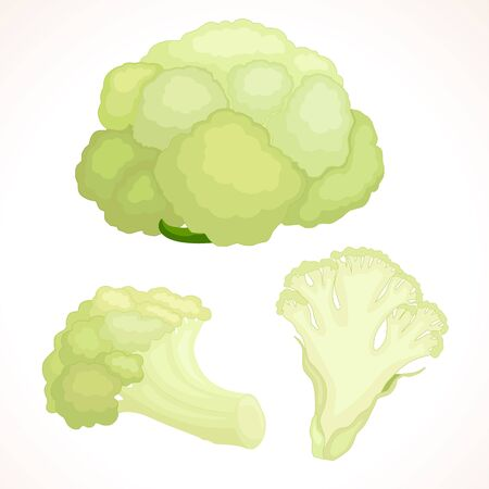 an inflorescence: Fresh cauliflower whole, cut, inflorescence isolated on background Illustration