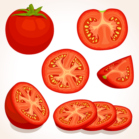 Set of different tomatoes isolated on background. Illustration