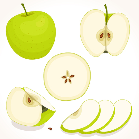 Set of vector apple. Whole, sliced, half of apple isolated on white background. Vector illustration.