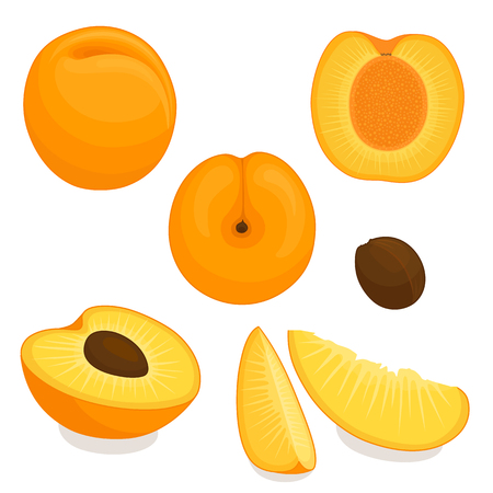 Vector apricot. Set of whole, sliced, half of apricots isolated on white background. Illustration. Illustration