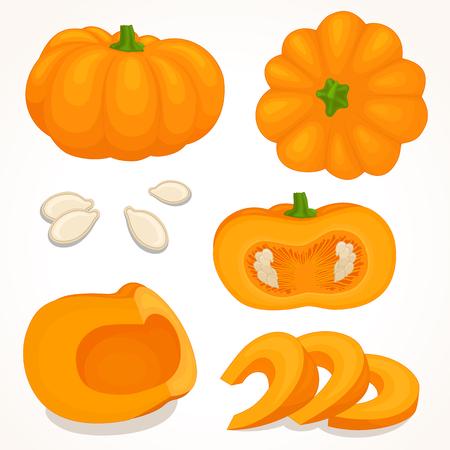 Vector pumpkin. Sliced, whole, half pumpkin.