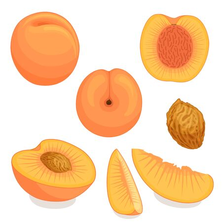 An image of a peach from different directions vector illustration.