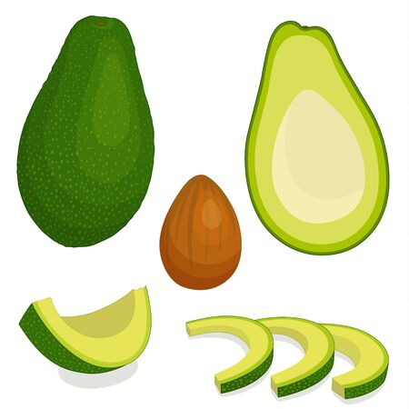An avocado vector. Whole half and sliced fruit of avocado. Detailed Illustration in cartoon style.