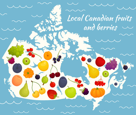 Local fruits and berries of Canada on the map.. Vector illustration. Traditional fruits for North America.