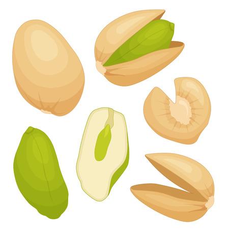 Pistachio vector. A set of whole kernels, shells, cracked cores.