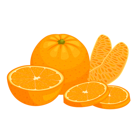 Vector oranges isolated on white background. Composition from citrus  Whole, half, uncut and orange slices.