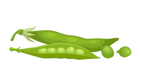Vector composition with green peas isolated on white background. Still life.