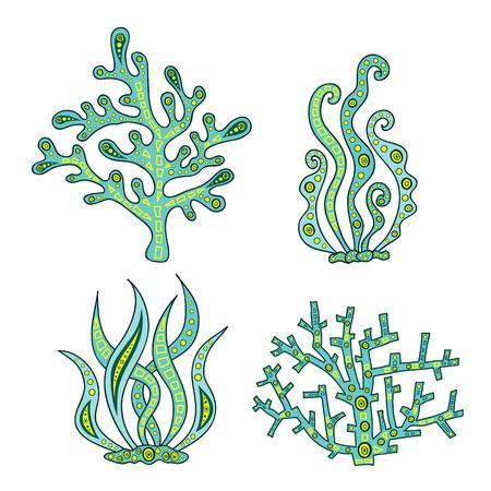 Set of vector seaweed and coral. Vector illustration. Doodle hand-drawn alga.