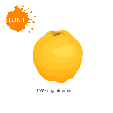 A whole quince on a white background. Vector template for advertising.